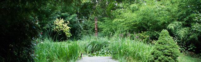 Arboretum_645